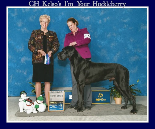 A Solid Black Great Dane At The Westminister Dog Show